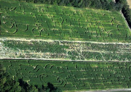 The Scavenger Hunt Corn Maze at Knollbrook Farm of Goshen