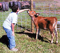 Visitors often see us tending our livestock and calves at Knollbrook Farm in Goshen, Indiana